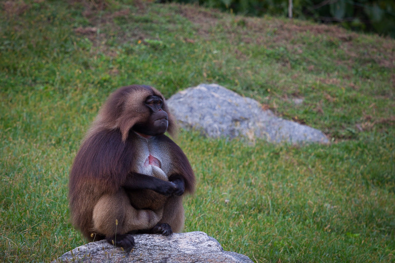 Monkey_BronxZoo_20170930.jpg