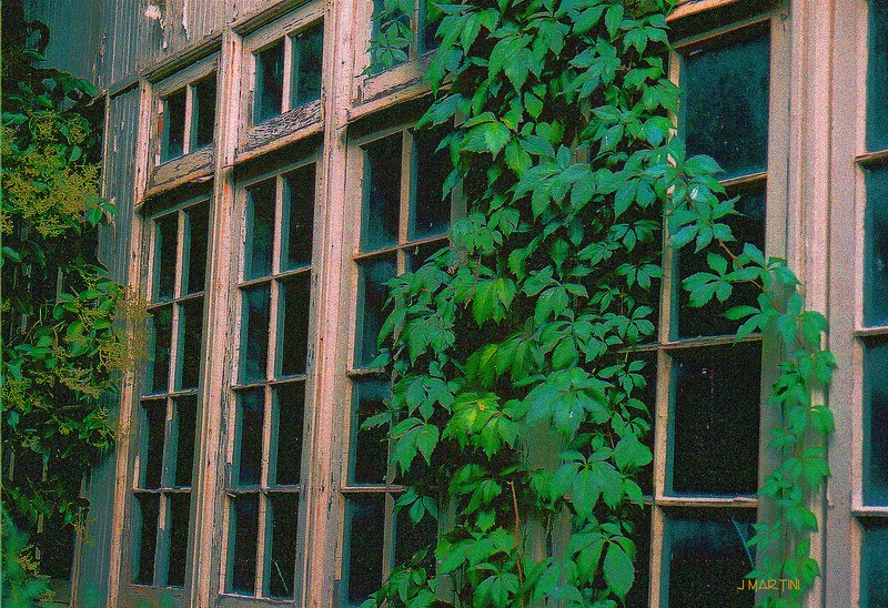 windows and vines again 5-13-2007.jpg