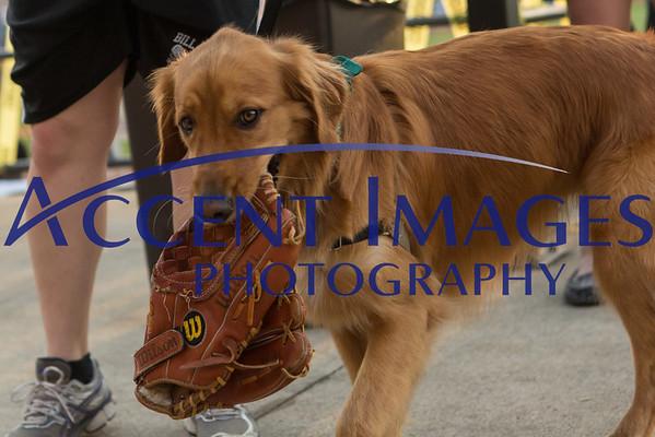 Bark in the Park - June