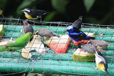trinidad and tobago 2008