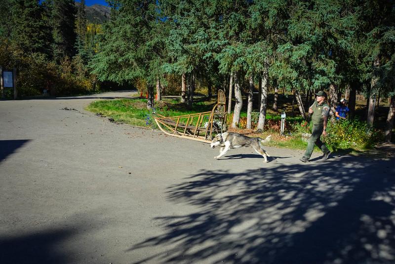 Denali-National-Park-30.jpg