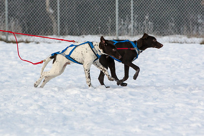 Maruskie Pups #5