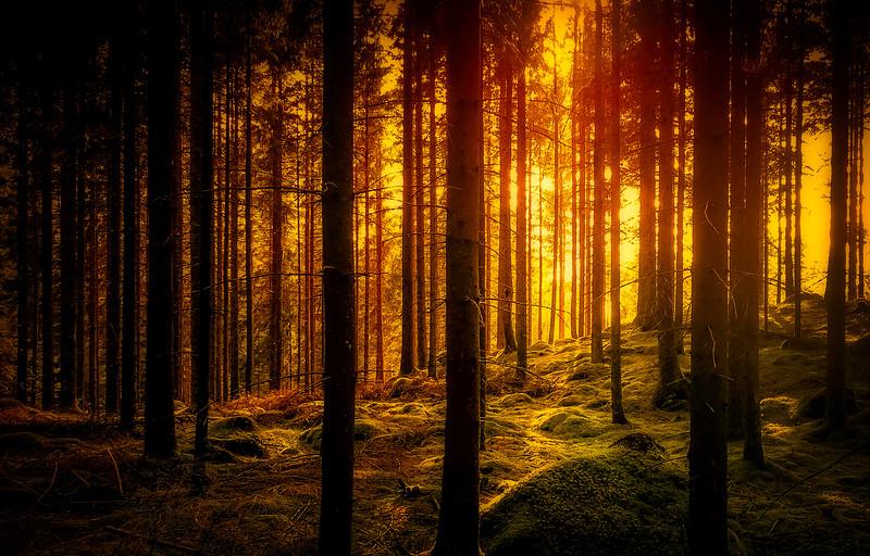 Forest Shadows-126.jpg
