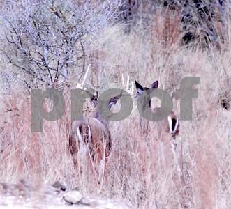 bowhunters-get-first-swing-at-2017-texas-deer-season