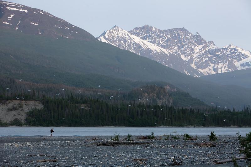 Alaska Copper River-8308.jpg