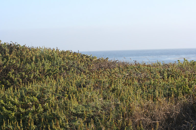view of the pacific.jpg