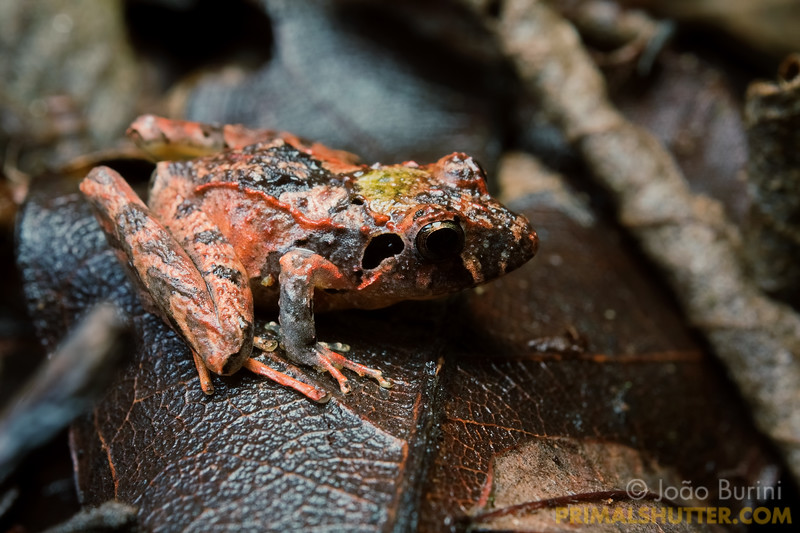 Colorful frog on the forest floor