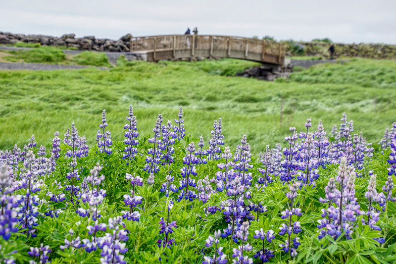 Iceland 3323 copy.jpg