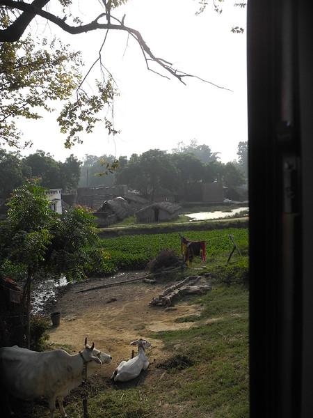 india2011 782.jpg