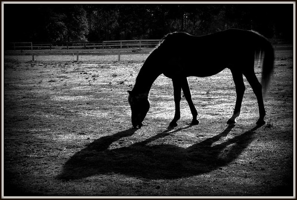 Early Morning at the Barn