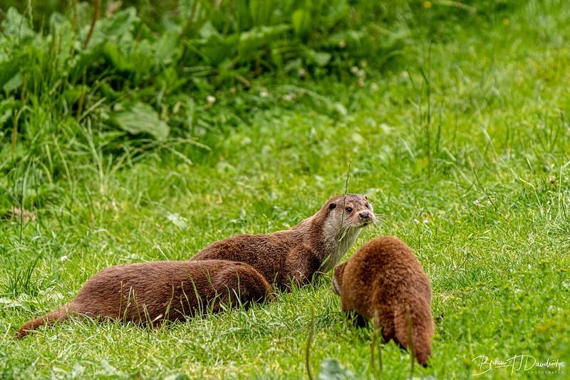 British Wildlife Centre_D850-0082.jpg