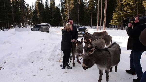 2-13-14 Donkey Video Jann