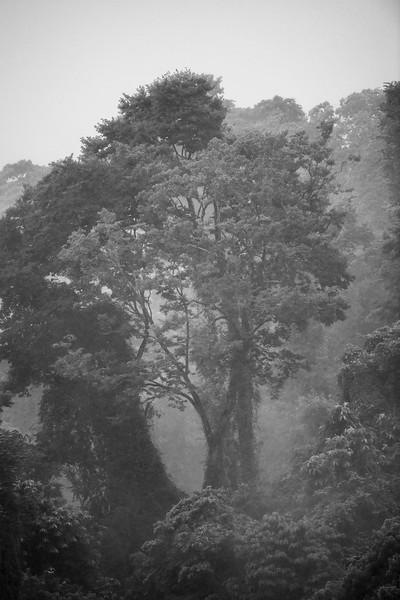 TreeBWDRM_0753.jpg
