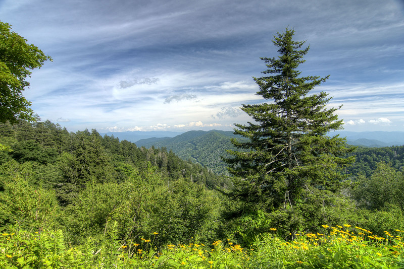 View from the Newfound Gap Overlook at the Great Smoky Mountains National Park in Cherokee, NC on Sunday, August 4, 2013. Copyright 2013 Jason Barnette