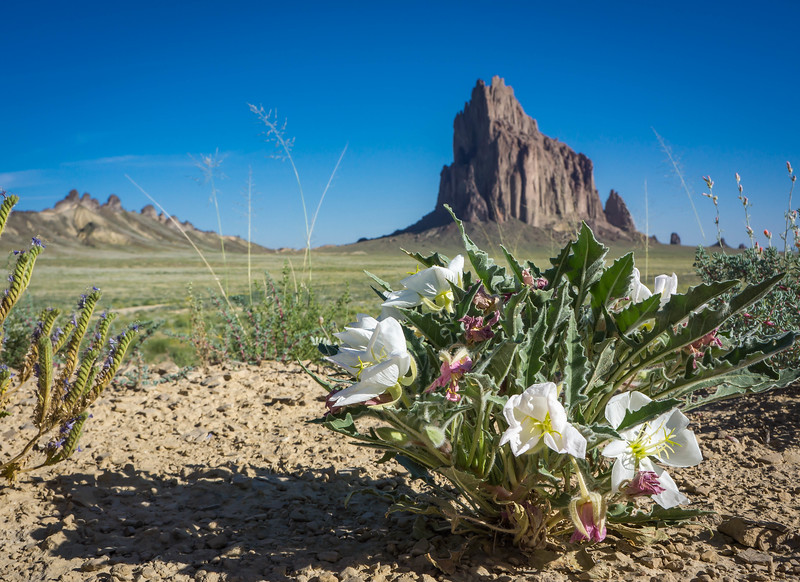 Shiprock_Flowers_Hank_Blum_Photography.jpg