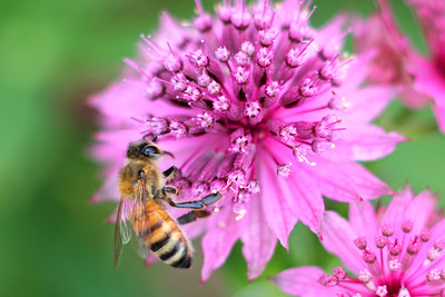 Honey Bees & Beekeeping