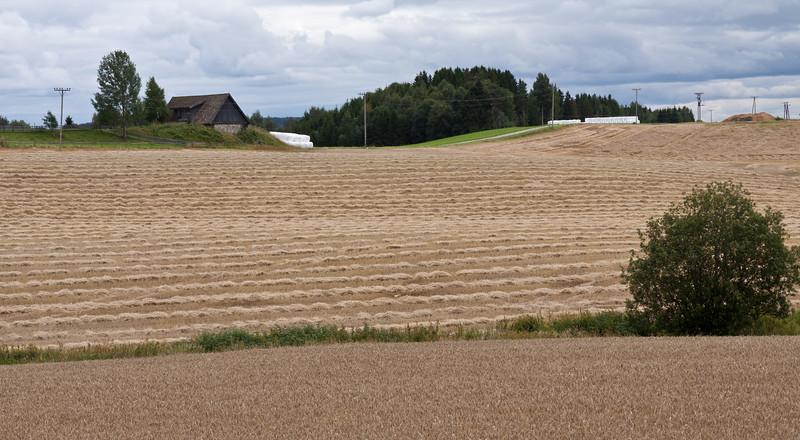 Høst2010-101