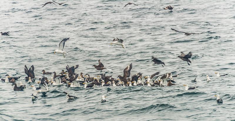 Magdalena Island/ Punta Arenas