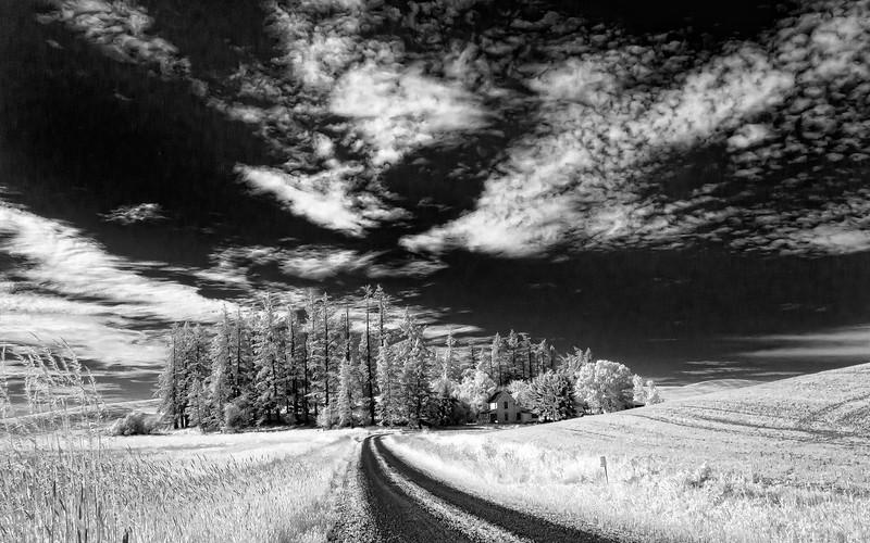 112.Dave Crawforth.1.Trees-n-road_7472.jpg
