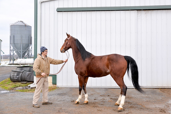 Sensenig Horses