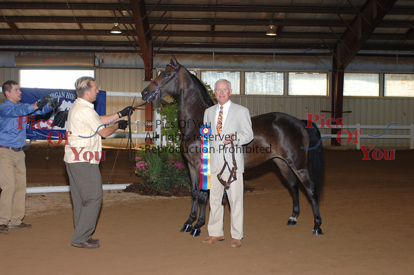 CLASS 004 Champion Mare