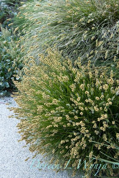 Garden at Argyle winery_1063.jpg