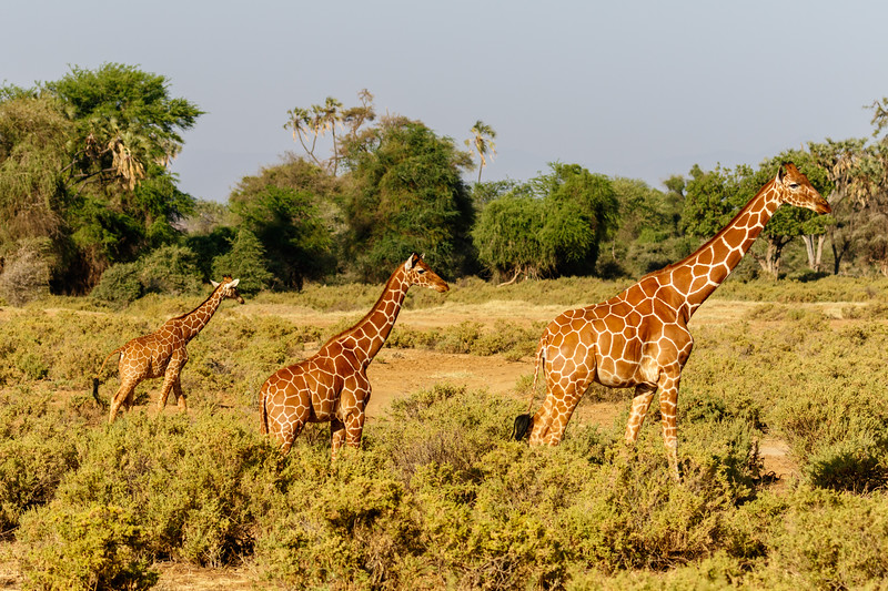 Kenya 2015-02345.jpg