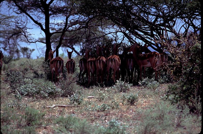 Kenya1_066.jpg