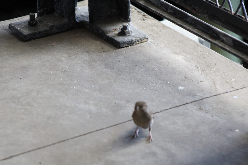 Bird on ramp to ferry boat.JPG