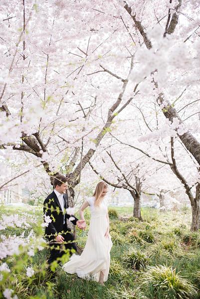 Cherry Blossoms (177 of 182).jpg