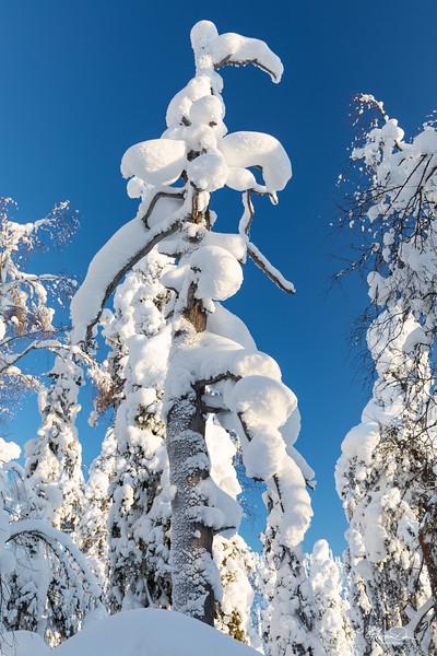 The Winter Coat
