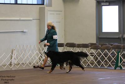 Veteran Sweeps 11+ yrs Dog