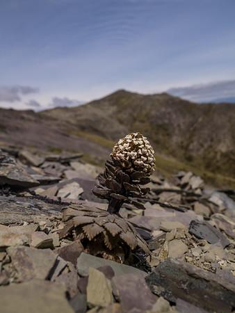 New Zealand Plants & Fungi
