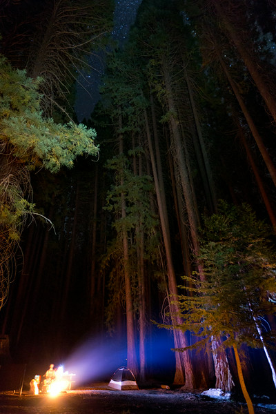Sequoia_0826.jpg