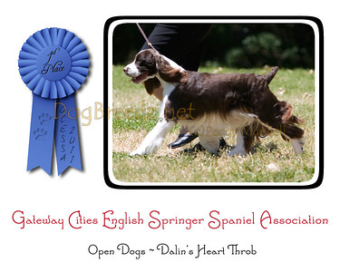 GCESSA Specialty - Open Dogs