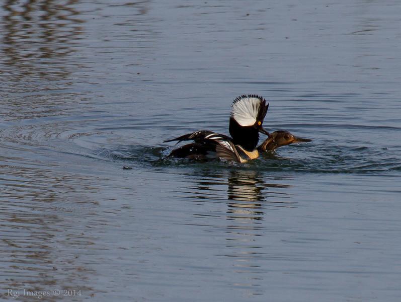 Duck nooky.