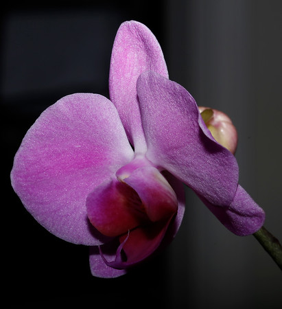Orchids 2018