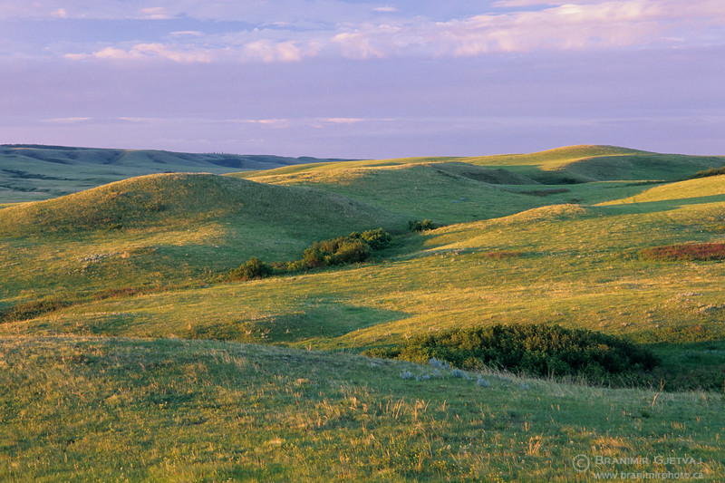 Prairie and holling hills at sunrise. Cypress Hills