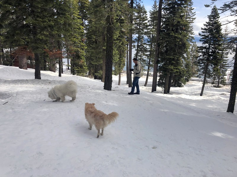 2019-03-21-0017-Trip to Tahoe with Dogs-Lake Tahoe-Curtis-Teddy the Dog-Leo the Dog.JPG