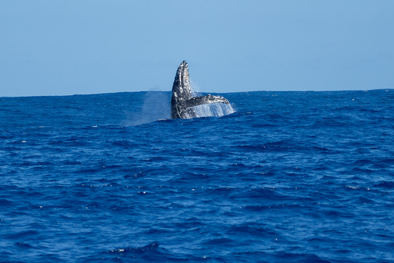 whales-leila-57.jpg