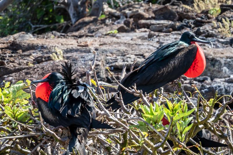 Galapagos-4151.jpg