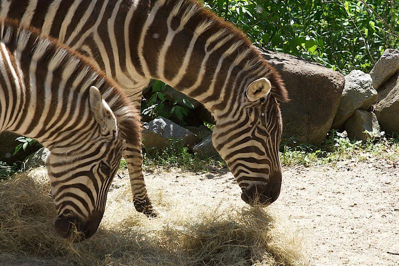 Zoo_Trip_48.jpg
