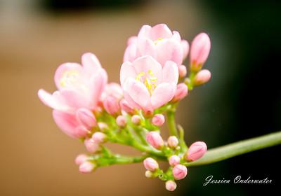 Springtime in Richmond