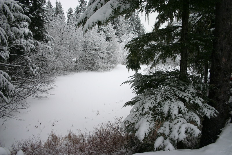 Winter view of the pond