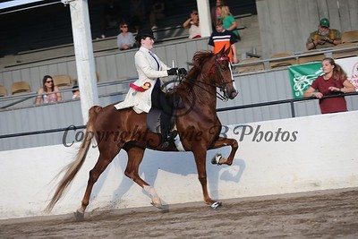 33. Bluegrass Series 5 Gaited Show Pleasure Amateur/Jr. Exhibitor