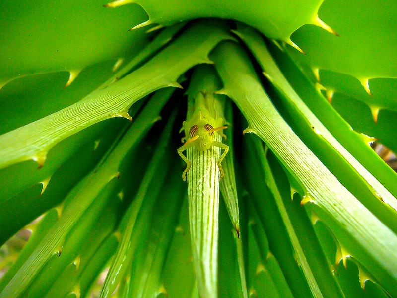 young grasshopper.jpg