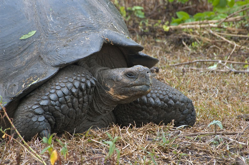 One stern tortoise face   (Dec 09, 2005, 10:33am)