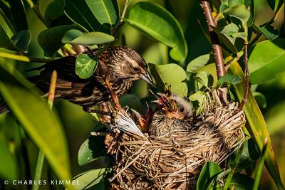 Birds in the Nest: 2020
