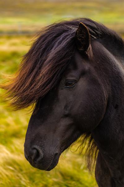 Faroes_5D4-3267.jpg