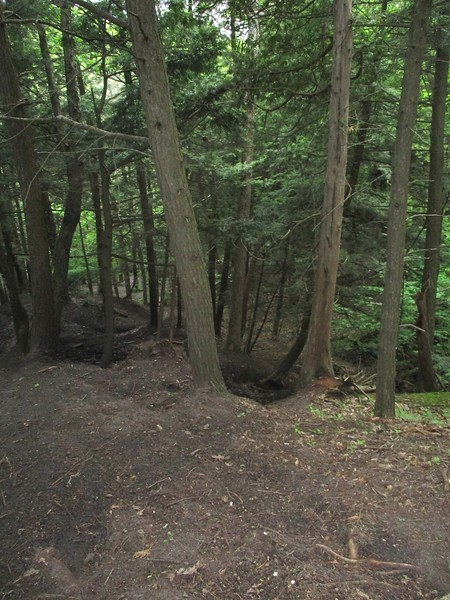 Looking down into ravine in Area 6 - Photo by Kathryn McHolm
